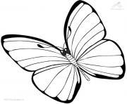 papillon 37 dessin à colorier