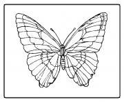 papillon 12 dessin à colorier