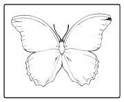 papillon 60 dessin à colorier
