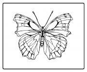 papillon 137 dessin à colorier