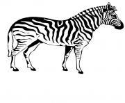 zebre 4 dessin à colorier