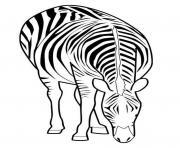 zebre 30 dessin à colorier