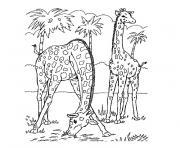 palmier avec deux girafes dessin à colorier