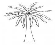 palmier original dessin à colorier