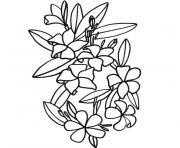 fleur de tiare dessin à colorier