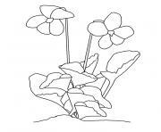 fleur violette dessin à colorier