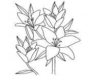 fleur de vanille dessin à colorier