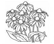 fleur marguerite dessin à colorier