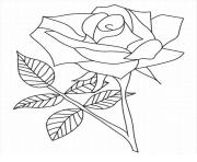 Coloriage roses 49