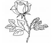 Coloriage belle rose amour