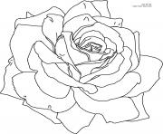 Coloriage roses 6