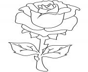 Coloriage roses 71