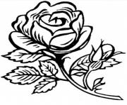 Coloriage roses 34