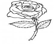 coloriage roses 2