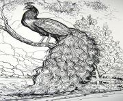 Coloriage adulte Fairy Tale Peacock