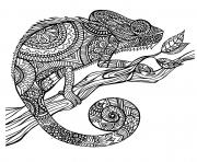 Coloriage adulte animaux cameleon