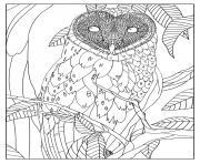 adulte chouette effraie par mizu dessin à colorier