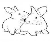 lapins ensemble realiste dessin à colorier