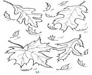 Coloriage automne feuilles fall
