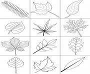 automne feuilles fall dessin à colorier