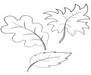 fall automne feuilles dessin à colorier