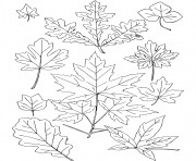 automne feuilles dessin à colorier
