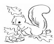 ecureuil automne dessin à colorier