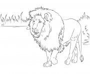 Coloriage gorgeous african lion