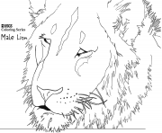 Coloriage male lion head