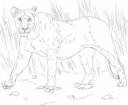 Coloriage walking lioness