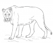 Coloriage lioness by Lena London