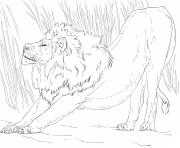 Coloriage etirement lion