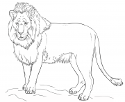 lion by Lena London dessin à colorier