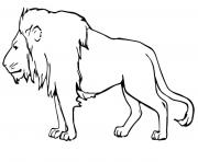 Coloriage lion masculin male