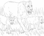 lioness with cubs dessin à colorier