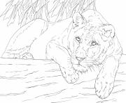 Coloriage lying lioness