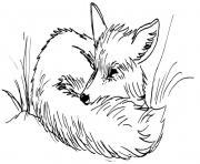 renard se repose dessin à colorier