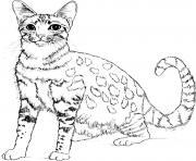 chat realiste dessin à colorier