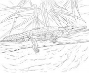Coloriage crocodile de johnston