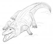 Coloriage crocodile marin daustralie realiste dessin