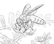 abeille geante realiste dessin à colorier