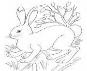 Coloriage lapin qui porte un gros oeuf dessin