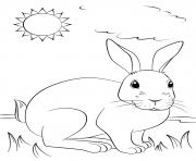 un lapin realiste profite du soleil dessin à colorier