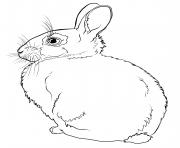 lapin realiste de dos dessin à colorier