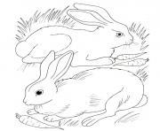lapin et lapina mangent des carottes dessin à colorier