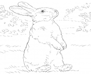Coloriage lapin bunny avec oeuf paques dessin