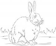 cute lapin vrai realiste noir et blanc dessin à colorier