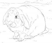 realiste lapin dessin à colorier