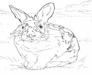 lapin relaiste dans un environnement naturel dessin à colorier