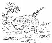 chaton super mignon jouant au jardin dessin à colorier